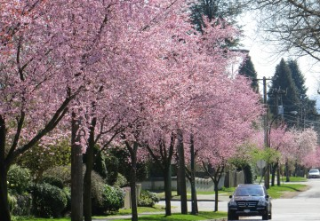 Spring returns to Vancouver